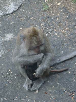 Ubud Monkey Forest Bali Photo 15