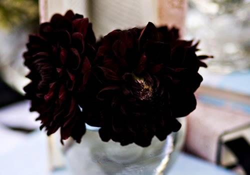 Flores Negras, parte 5