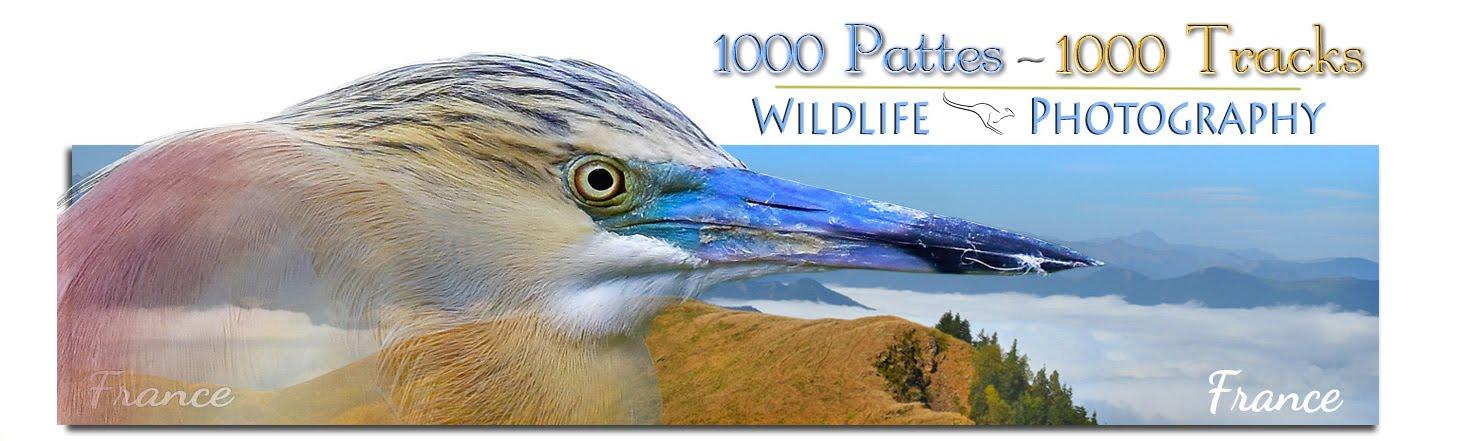 1000 PATTES - 1000 TRACKS