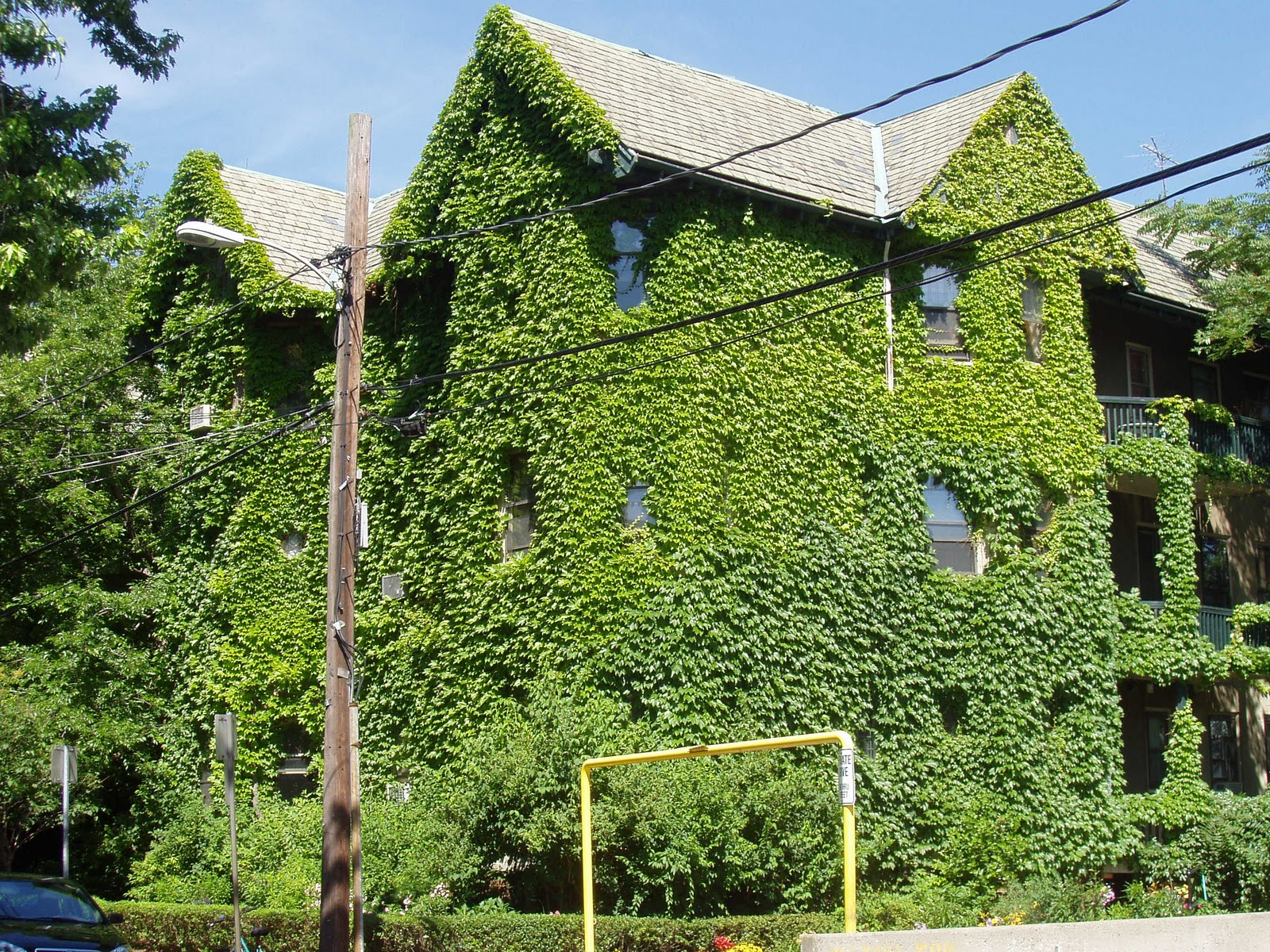 Just a touch of gray green with ivy for The ivy house