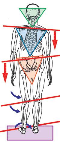 PODOPOSTUROLOGIA Especialidade que estuda o pés em relação a Postura.