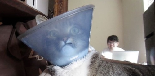 I Have Seen The Whole Of The Internet: Lampshade Head Cat