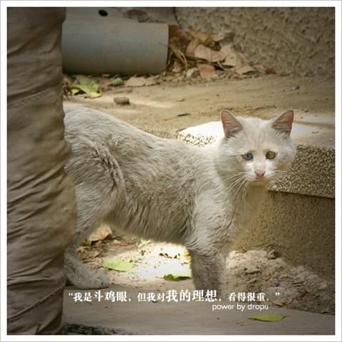 sedih dan digelar kucing yang paling sedih di dunia nak tengok apa