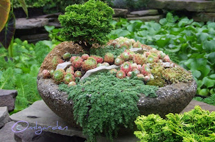Hypertufa Conifer Container