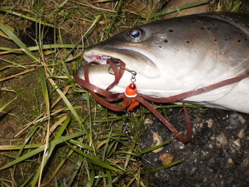 рыбалка осенью на тайменя в