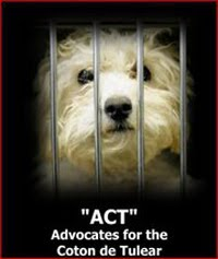 "Please ""ACT"" now to protect the Coton de Tulear from exploitation by AKC supporters!"