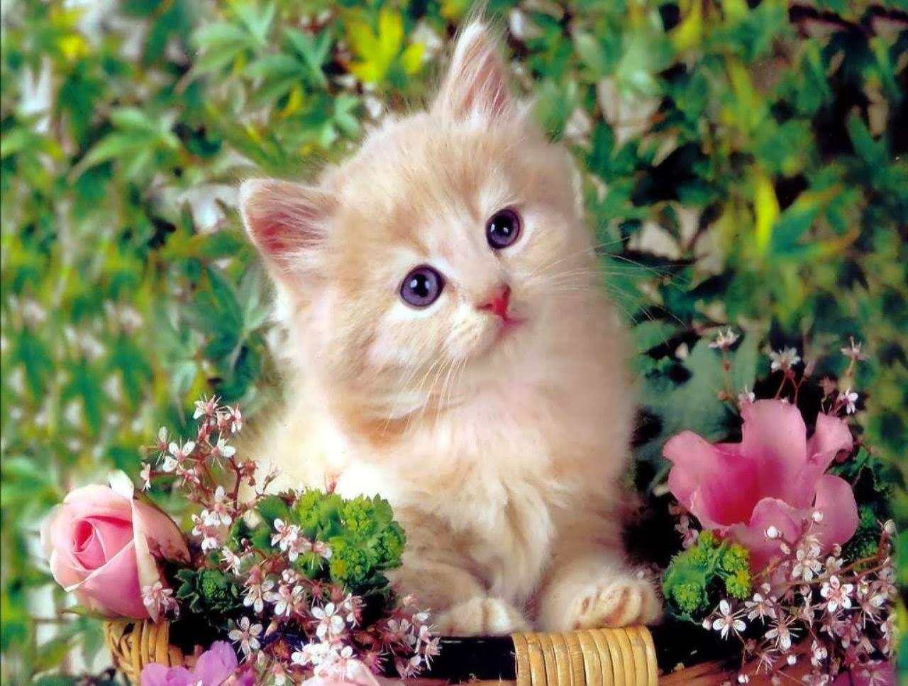 Cute kitten wallpaper for desktop wallpaperyork brows your cute kitten wallpaper for desktop thecheapjerseys Choice Image