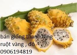 Thanh long vàng