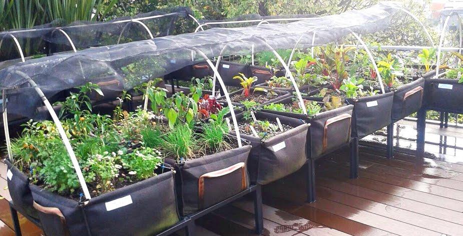 sistema modular para azoteas verdes