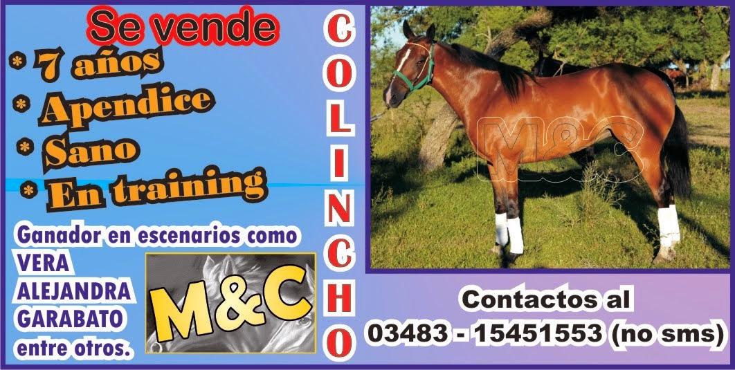 COLINCHO - 01/12/14