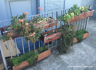 Urban gardening in San Francisco - container boxes