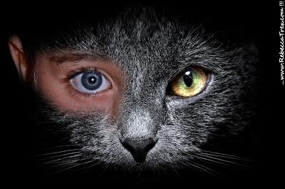 Certosino gatto Blues 2013 rebeccatrex
