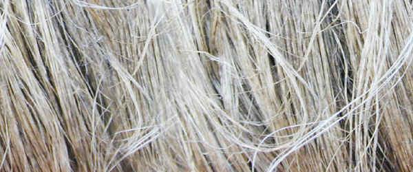 Organic Linen Fiber | PickNatural.com