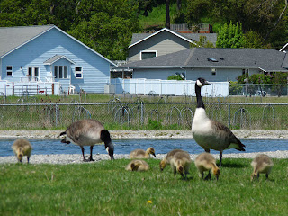 Everybody enjoys the wildlife in the Park during walks