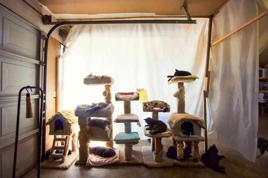 santuario para gatos