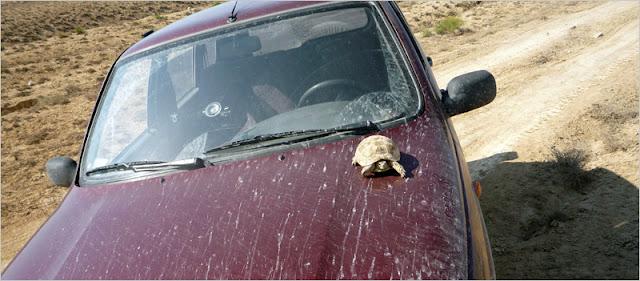 Черепаха на капоте Нивы