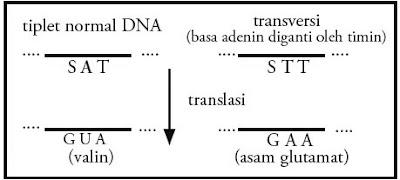 Transversi DNA