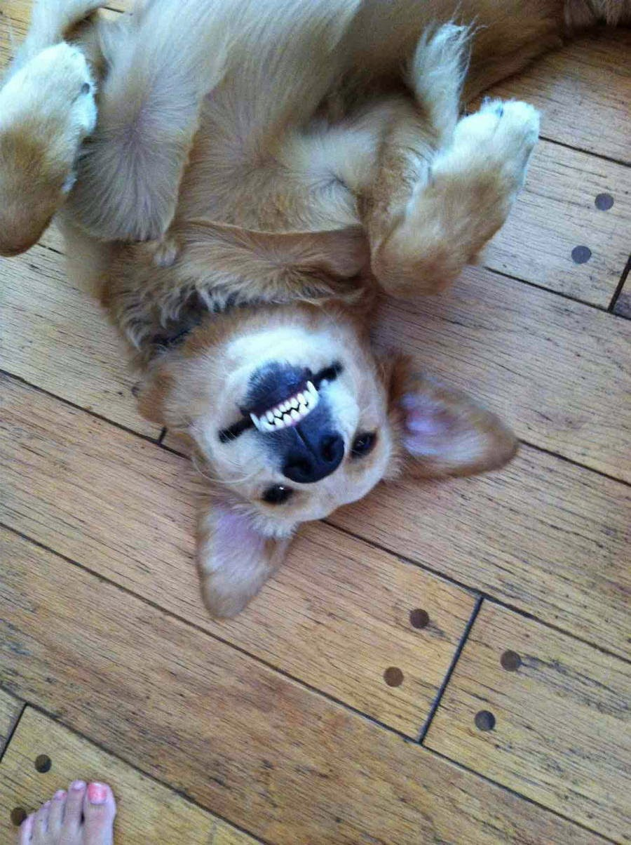Cute dogs - part 14 (50 pics), funny dogs, cute dog pictures, cute puppies