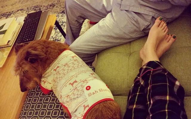 irish terrier dog wearing Christmas jammies