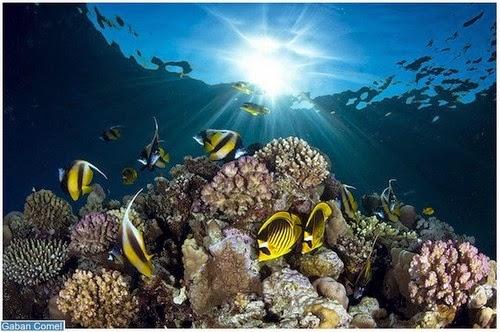 Jom Kita Lihat Haiwan Dalam Laut Yang Belum Korang Lihat Lagi