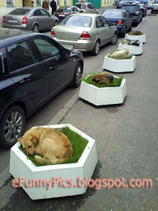 Dog Sleeping Time