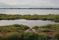 Els paisatges del Delta