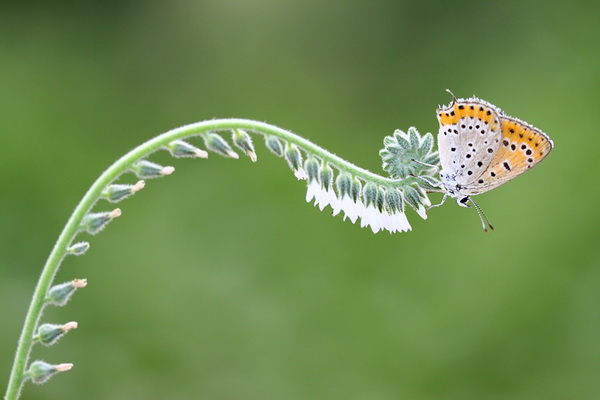 Macro Photography by Mehmet Karaca