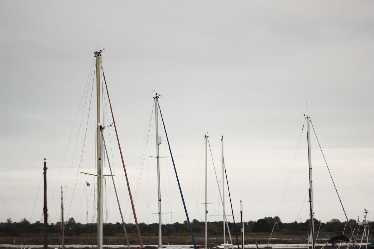 maldon yacht club