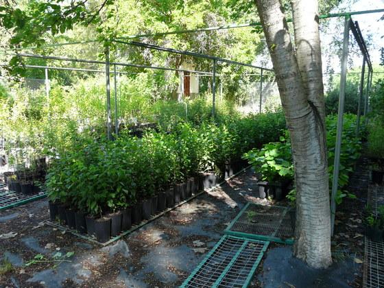 Alternativa yeclana consumo ecologico cierran el vivero for Viveros albacete