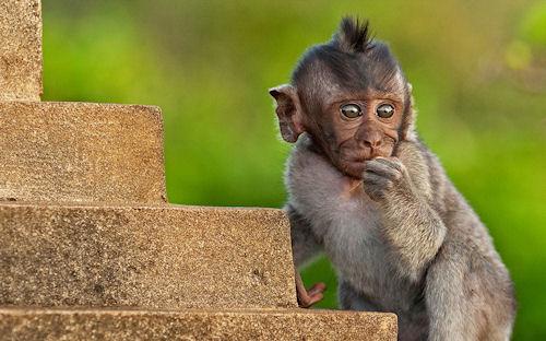 Banco de Imagenes Gratis .Com: Fotografías de changos, monos ...