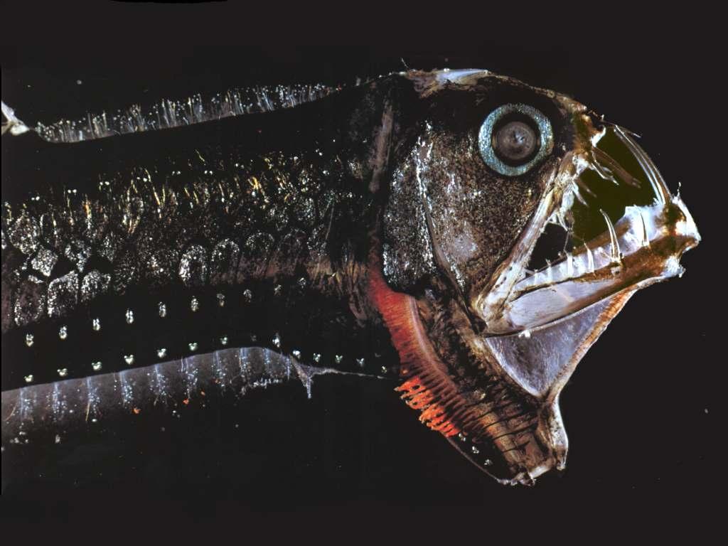 Blog fuad informasi dikongsi bersama horrifying and for Deep ocean fish