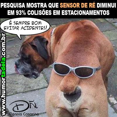 Imagens Cachorro Prevenido Engraçadaspiadas Para Facebook Recados