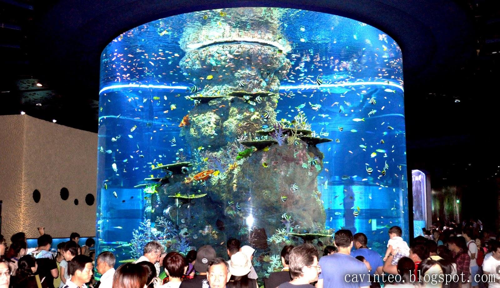Entree Kibbles S E A Aquarium World 39 S Largest Aquarium