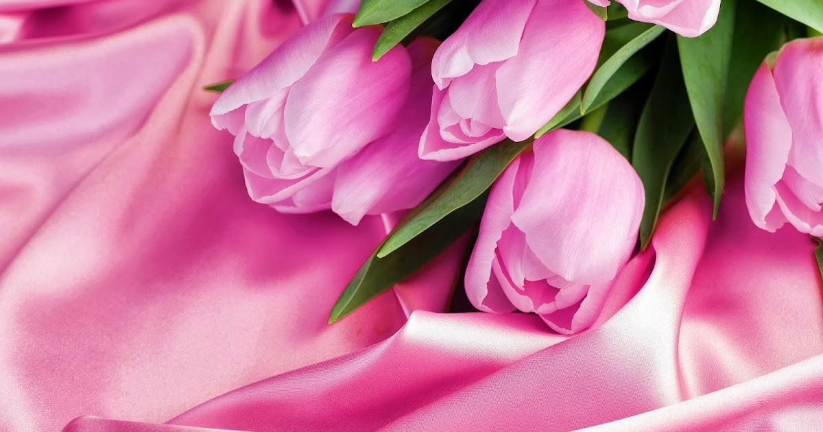 Roze achtergrond met roze tulpen   Bureaublad Achtergronden