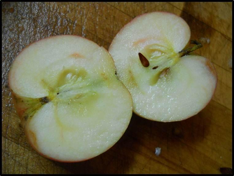 Savoir faire conserver des pommes par ici des pommes par l - Conserver pommes coupees ...