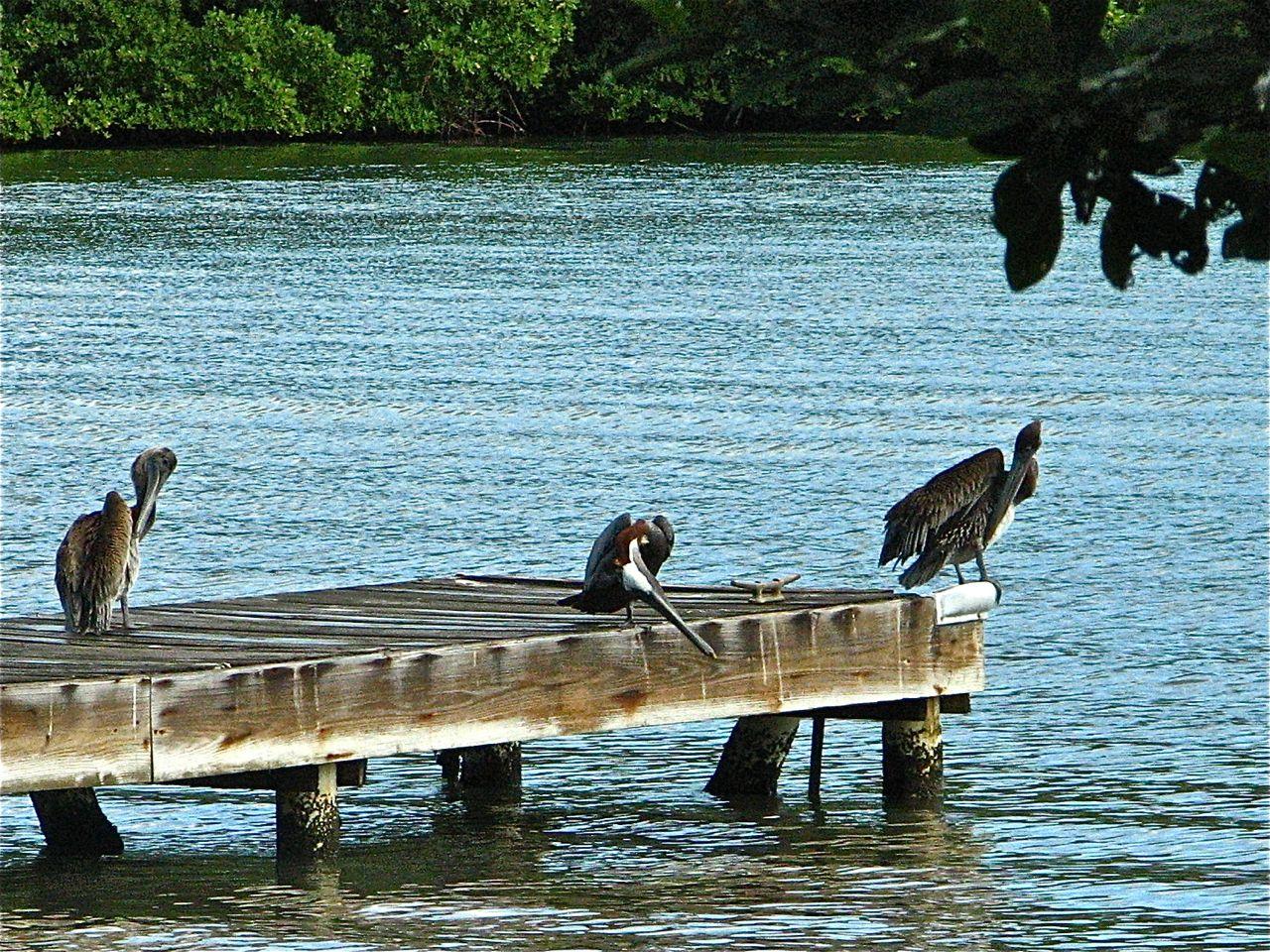 Island Woman's Culebra: A Fine Art