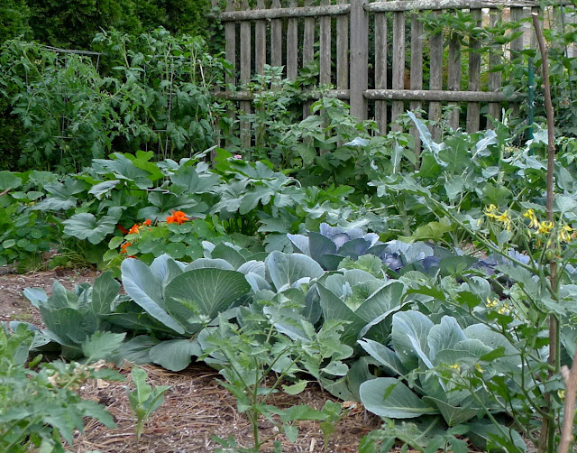Ten Tips for Growing  Edibles in Small Spaces