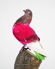 EL PINGO.
