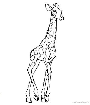 giraffa disegno colorare