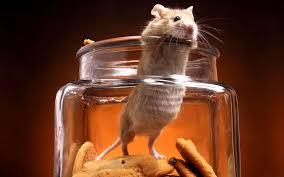 Imageges Graciosas de Animales, Ratón en Apuros