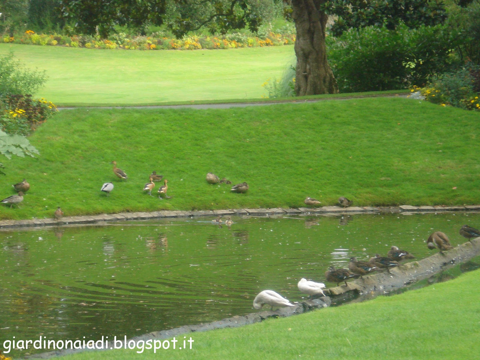 Laghetti da giardino per tartarughe stunning laguna for Laghetto per tartarughe usato