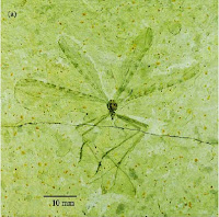 http://sciencythoughts.blogspot.co.uk/2014/05/a-hangingfly-from-early-cretaceous.html
