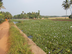 Kerala backwater at Kanjiram boat stop.