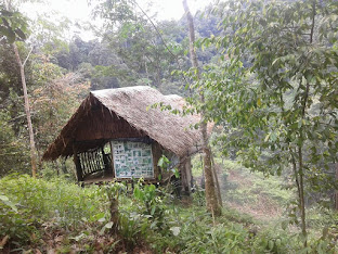 WOOD HUT IN THE JUNGLE