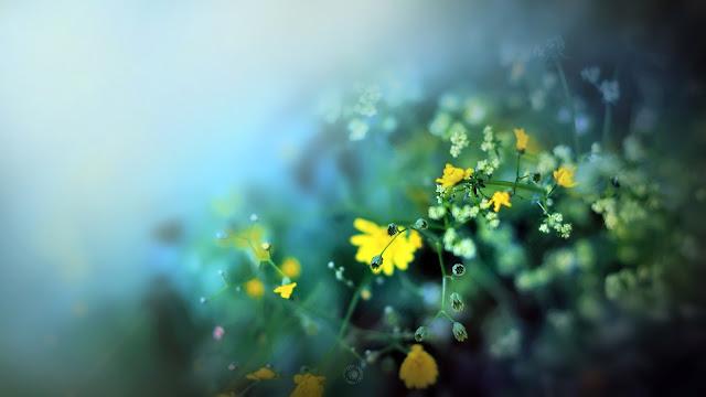Hình nền đẹp mùa xuân - ảnh 23