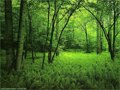 صورة لغابة خضراء
