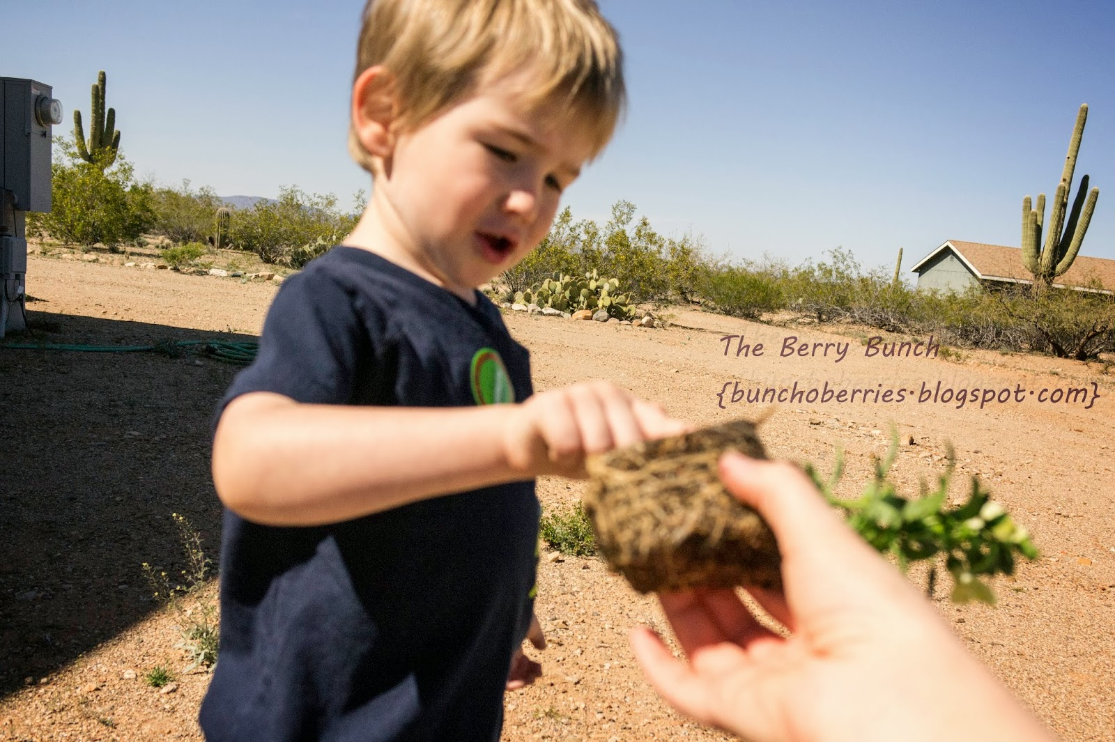 The Berry Bunch: The Turtle and the Monkey: Learning About Plants {Virtual Book Club for Kids}
