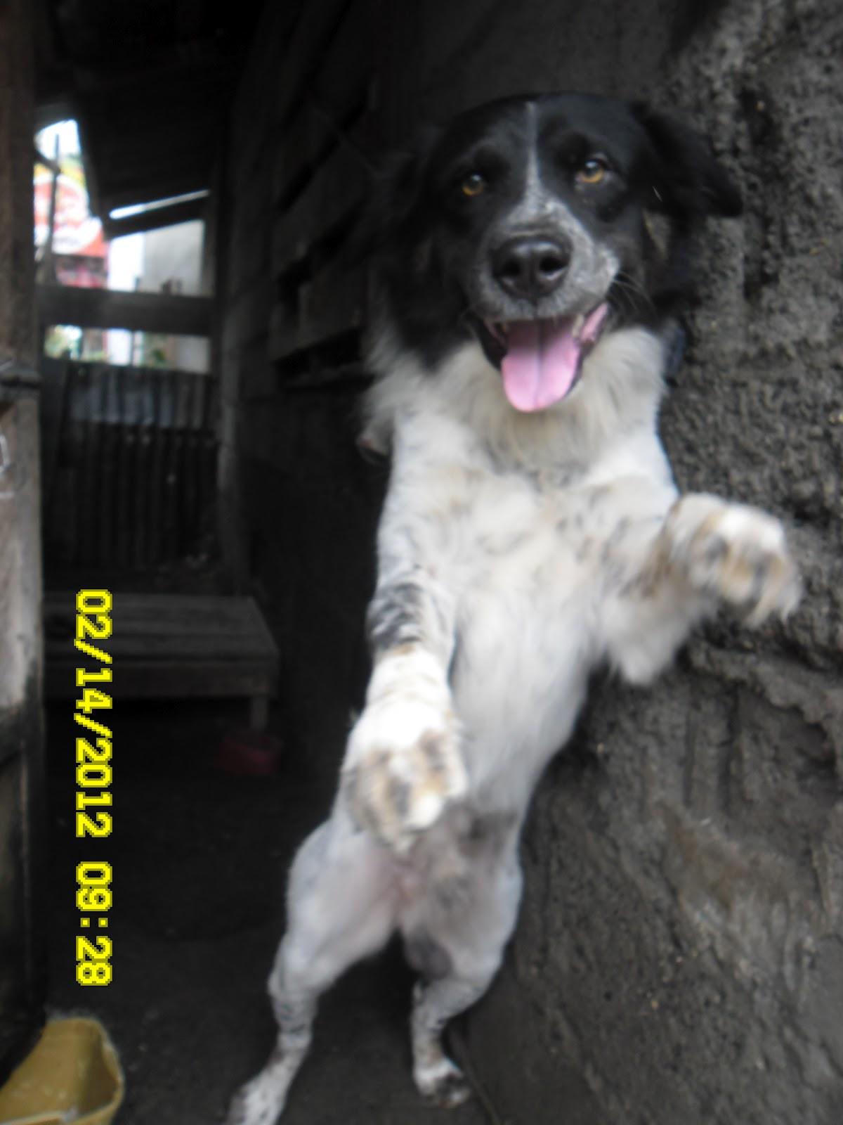 Jeni The Girl Next Door Balto Dances Teach Me How To Dougie Dog