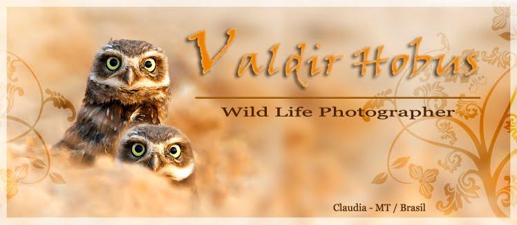 VALDIR HOBUS FOTOGRAFIA
