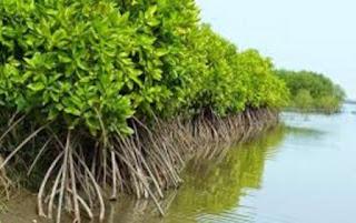 Upaya Pelestarian Laut Di Indonesia